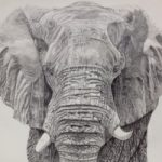 Elephant – Old Father Time by Ringwood Animal Artist Pauline Scott – Hampshire Art Gallery
