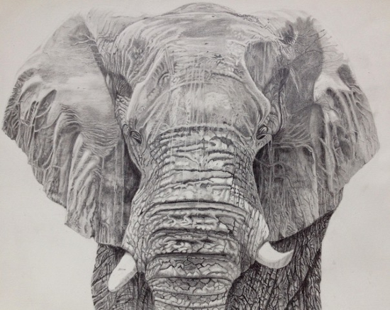 Elephant - Old Father Time by Ringwood Animal Artist Pauline Scott - Hampshire Art Gallery