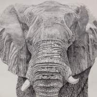 Elephant - Old Father Time by Ringwood Animal Artist Pauline Scott