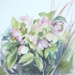 Hellebores Watercolour – Flowers Art Gallery – Chandlers Ford Eastleigh Hampshire Art Group Artist Ruth Lewis