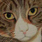 Pet Portrait – Cat – Freeway – Society of Animal Artists member Pauline Scott
