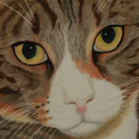 Pet Portrait – Cat – Society of Animal Artists – Pauline Scott