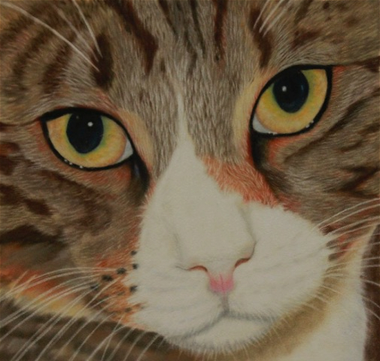 Pet Portrait - Cat - Freeway - Society of Animal Artists member Pauline Scott