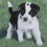 Pet Portraits – Skye the Dog by Ringwood Hampshire Animal Artist Pauline Scott