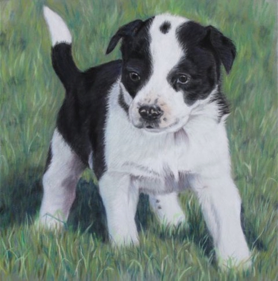 Pet Portraits - Skye the Dog by Ringwood Hampshire Artist Pauline Scott
