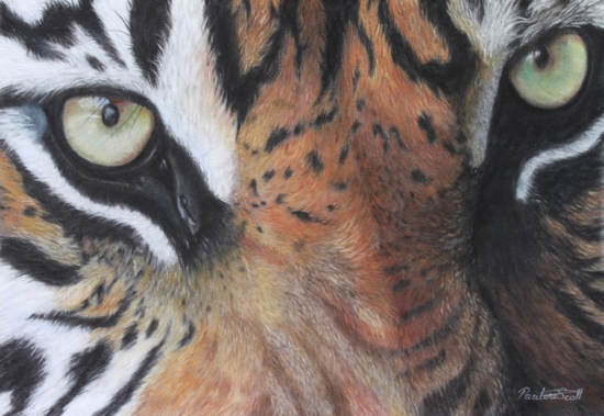Tiger - Eye of the soul - Animal Artist Pauline Scott - Hampshire Art Gallery