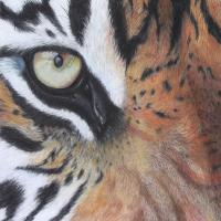 Tiger – Hampshire Art Gallery Wild Animal Artist Pauline Scott