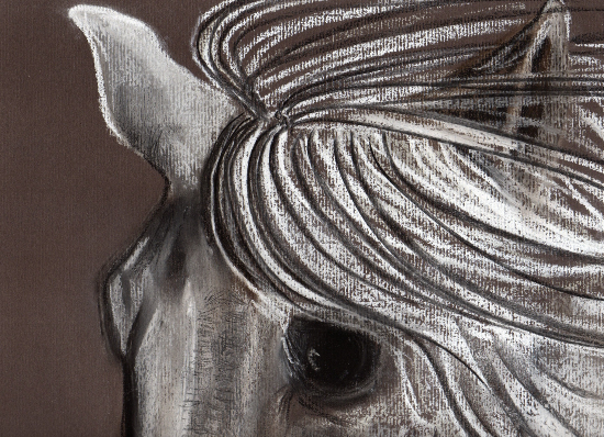Horse Portrait - Baylis Listening - Equine Art by New Forest Artist Jean Baylis