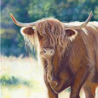 Animal Portrait – Hampshire Art Gallery – Scotish Highland Cow – Jennifer Thorpe