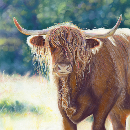 Animal Portrait - Hampshire Art Gallery - Scotish Highland Cow Shirley - Jennifer Thorpe