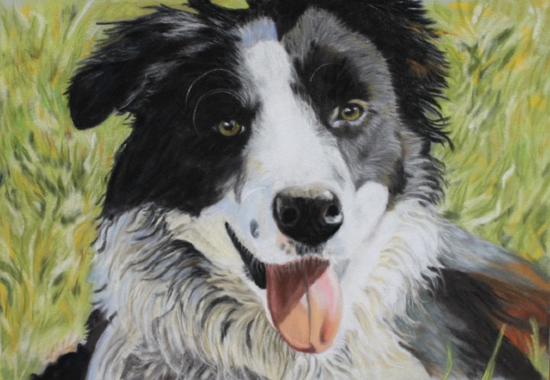 Border Collie Dog Portrait - Ringwood Art Society member - Animal Portrait Artist Pauline Scott