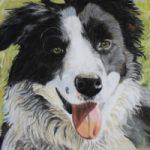 Border Collie Dog Portrait – Ringwood Art Society member – Animal Portrait Artist  Pauline Scott