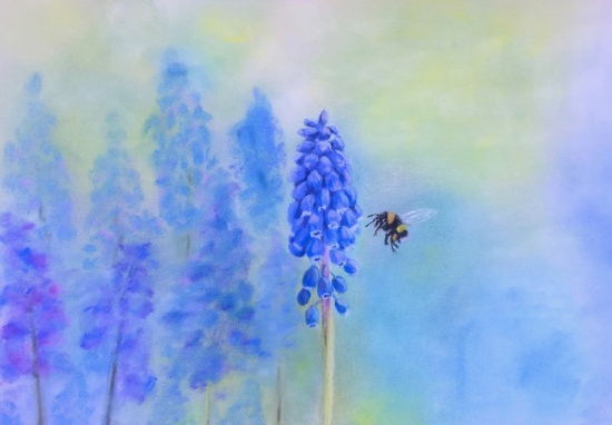 Simply Spring -Grape Hyacinth or Muscari - Pastel Art - Society of All Artists - Pauline Scott - Hampshire Artists Gallery
