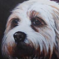 Pet Portrait – Dog – Bella – Petersfield Arts & Crafts Society Artist Alison Udall