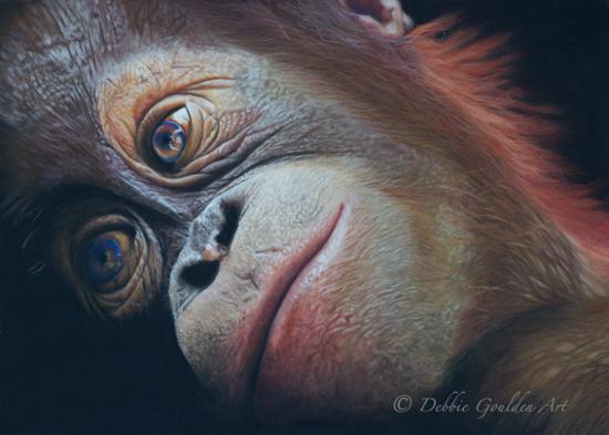 Baby Orangutan - Pastel Art - Romsey Hampshire Wildlife Artist Debbie Goulden
