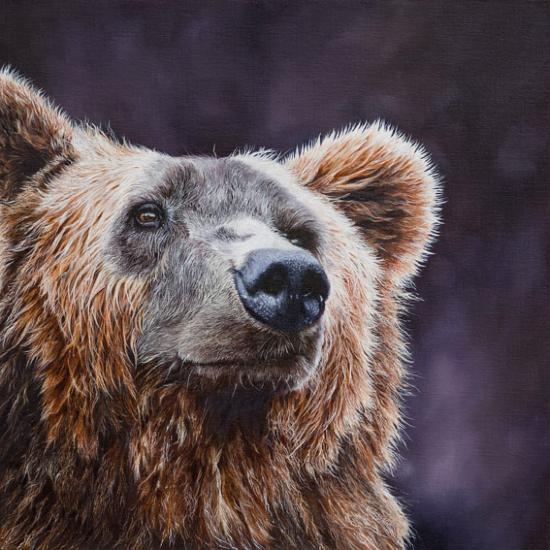 Bear - Original Oil Painting - Romsey Hampshire Wildlife Artist Debbie Goulden