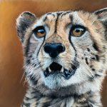 Cheetah – Pastel Art – Romsey Hampshire Wildlife Artist Debbie Goulden