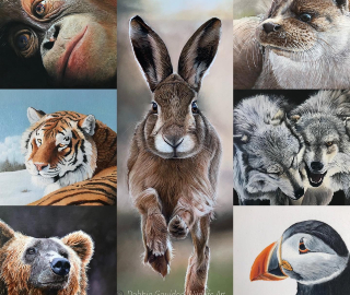 Debbie Goulden - Romsey Hants Wildlife Artist