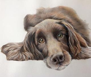 Pet Portraits - Paintings by Animal Artist Debbie Goulden - Romsey Hampshire