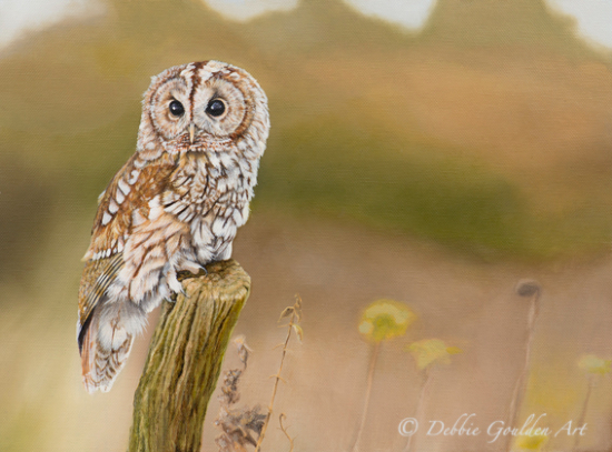 Tawny Owl At Rest - Oil Painting - Romsey Hampshire Wildlife Artist Debbie Goulden